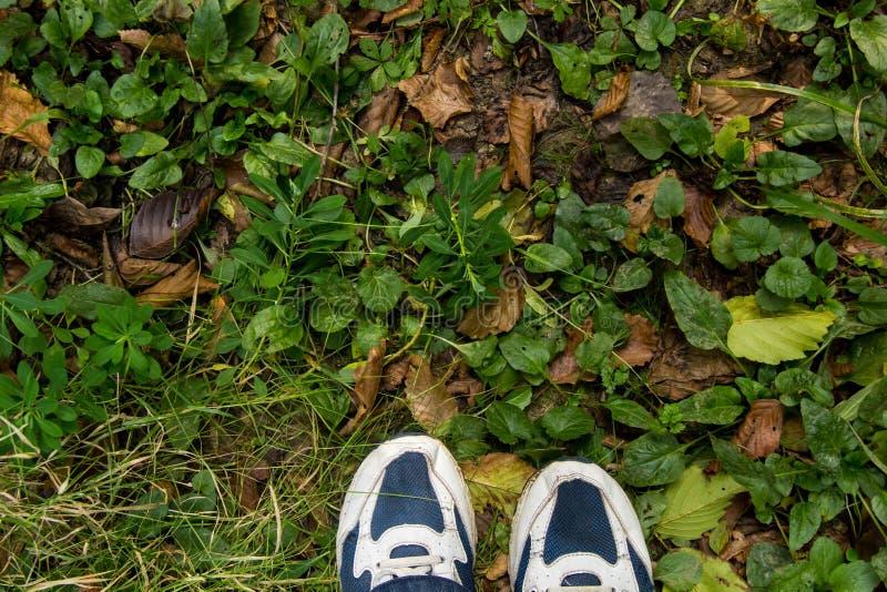 P?s f?meas em sapatas azuis do esporte na terra com grama foto de stock
