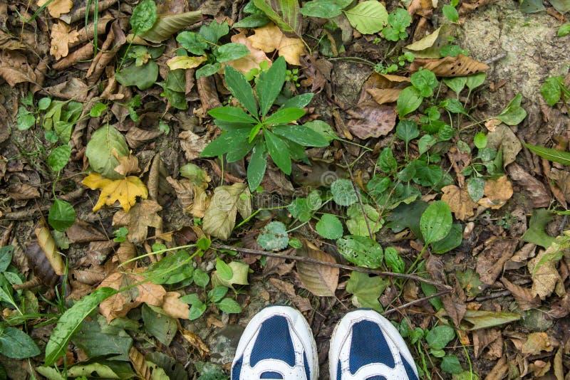 P?s f?meas em sapatas azuis do esporte na terra com grama fotografia de stock royalty free