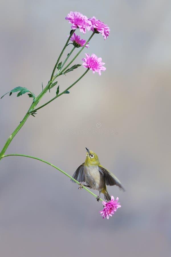 P?ssaro e flor imagens de stock