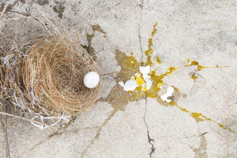P?ssaro quebrado, dos ovos est? caindo fora do ninho com casca de ovo e gema do p?ssaro dos ovos na terra de pedra cinzenta Inves fotos de stock