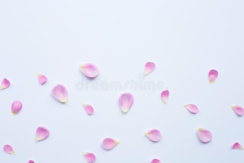 P?talas cor-de-rosa cor-de-rosa isoladas no fundo branco fotos de stock