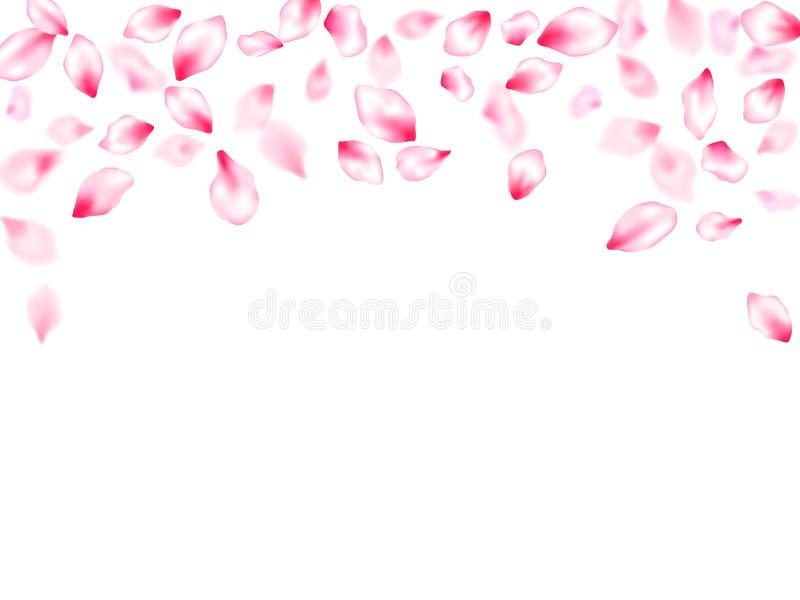 P?talos que vuelan del rosa japon?s de la flor de cerezo ilustración del vector