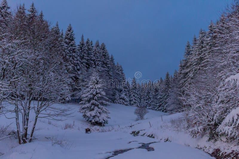 P? v?gen till och med den Thuringian skogen arkivbilder