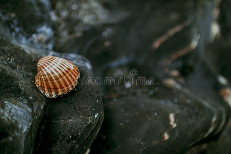 Płytka ostrość biel Shell i Brown obrazy stock
