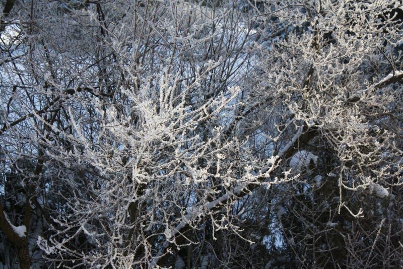 País das maravilhas do inverno imagens de stock