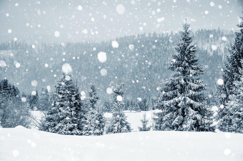 País das maravilhas do inverno com abeto Cumprimentos do Natal imagens de stock