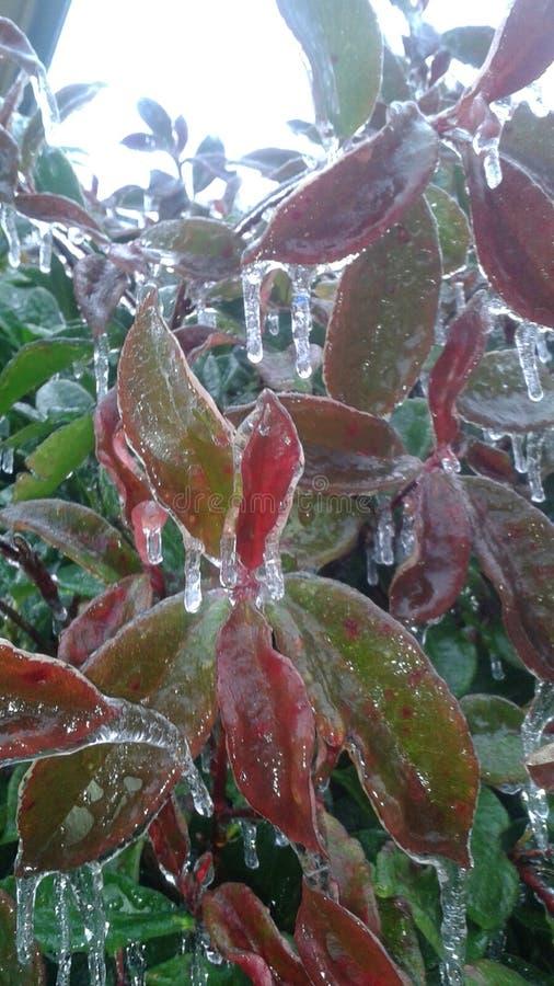 País das maravilhas do inverno do gelo foto de stock royalty free