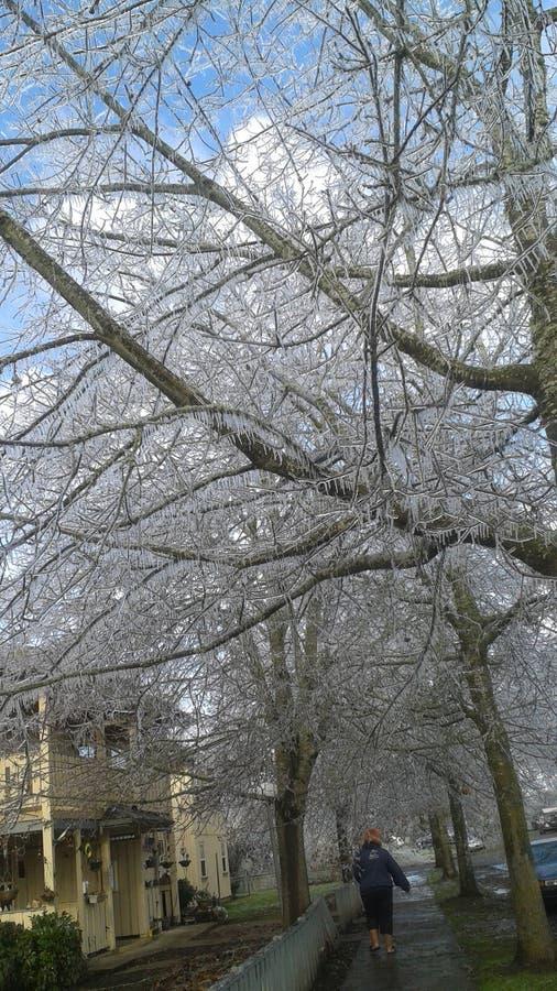 País das maravilhas do inverno do gelo imagem de stock royalty free