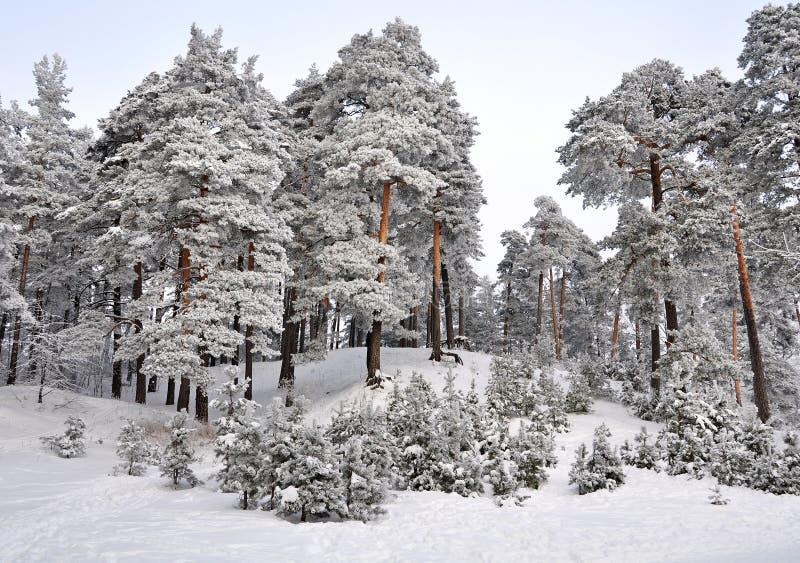 País das maravilhas do inverno na floresta coberto de neve fotos de stock