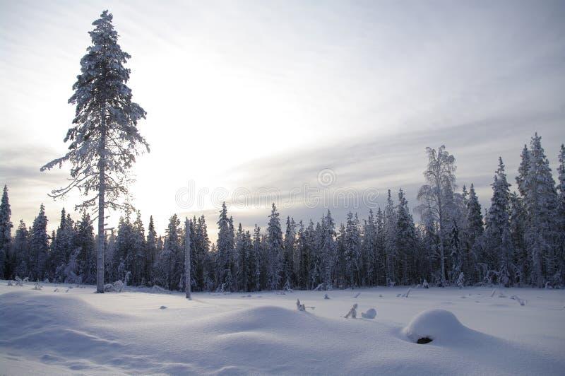 País das maravilhas do inverno no crepúsculo imagens de stock