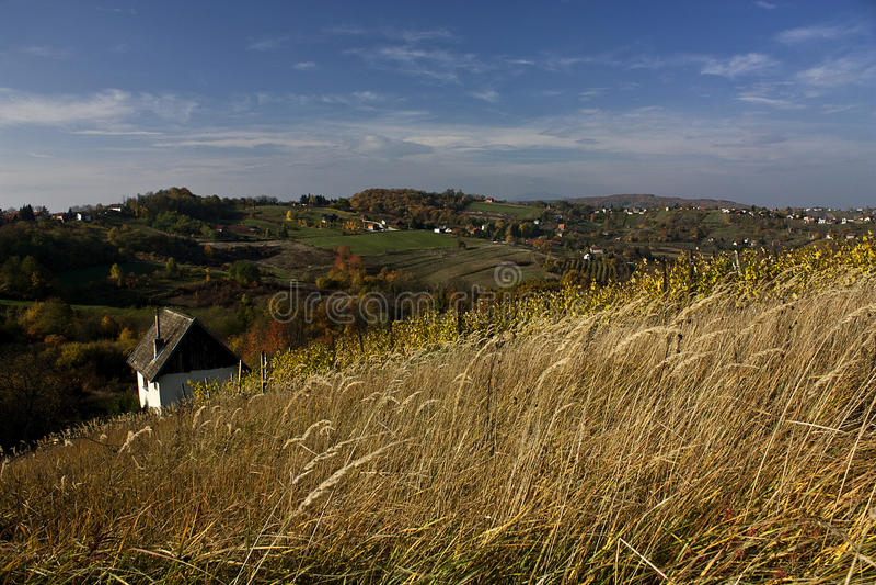 País de la yarda del vino foto de archivo libre de regalías