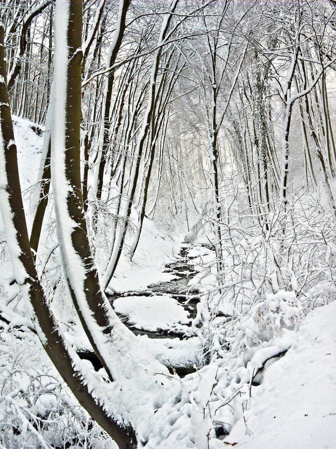 País de las maravillas del invierno imagen de archivo libre de regalías