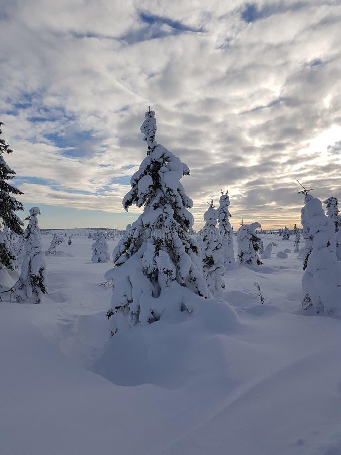 País de las maravillas del invierno cielo nublado con los árboles agradables cubiertos con nieve fotos de archivo libres de regalías