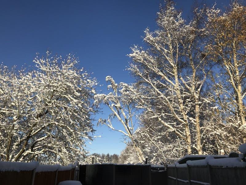 País de las maravillas del invierno en la Navidad fotos de archivo libres de regalías