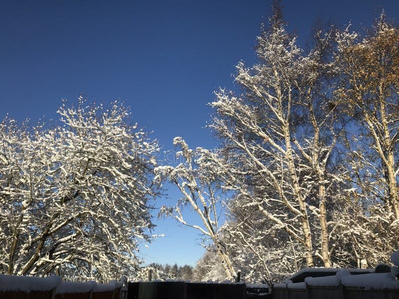 País de las maravillas del invierno en la Navidad foto de archivo libre de regalías