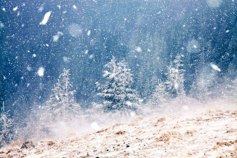 país de las maravillas del invierno - fondo de la Navidad con los abetos nevosos adentro foto de archivo libre de regalías
