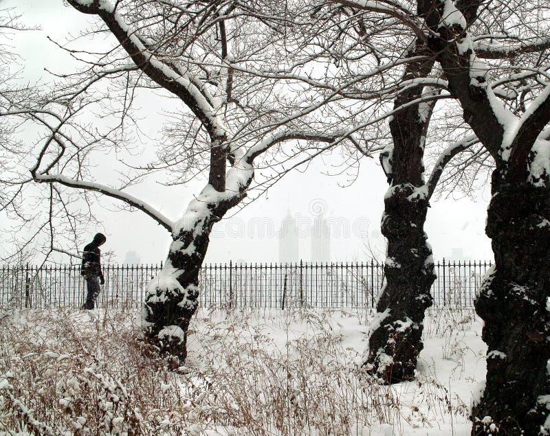 País de las maravillas del invierno, New York City fotos de archivo libres de regalías