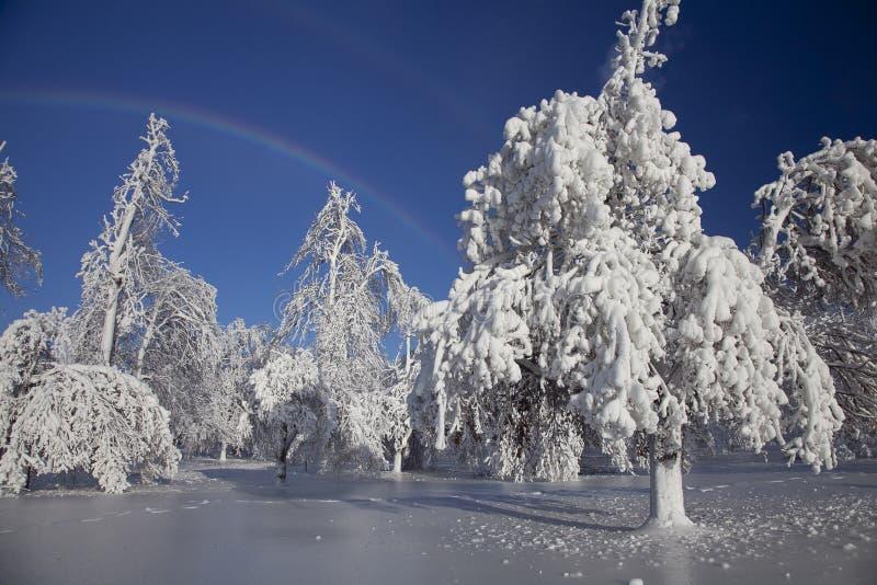 País de las maravillas del invierno - Niagara Falls foto de archivo libre de regalías