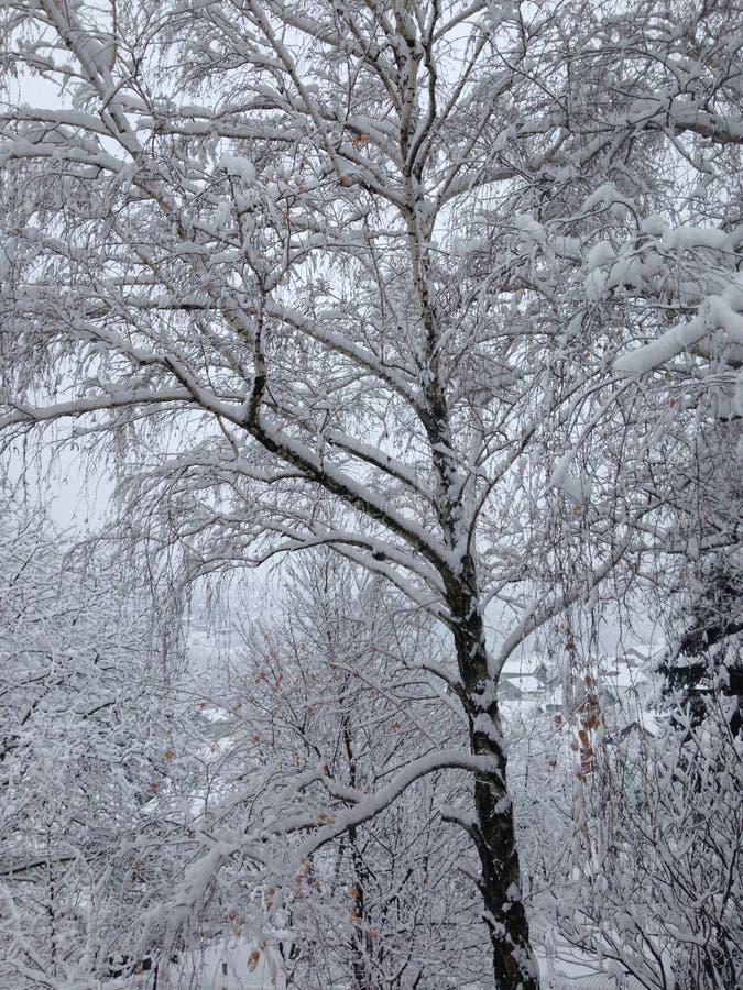 País de las maravillas del invierno, nuestro jardín en Serbia, Fruska Gora imágenes de archivo libres de regalías