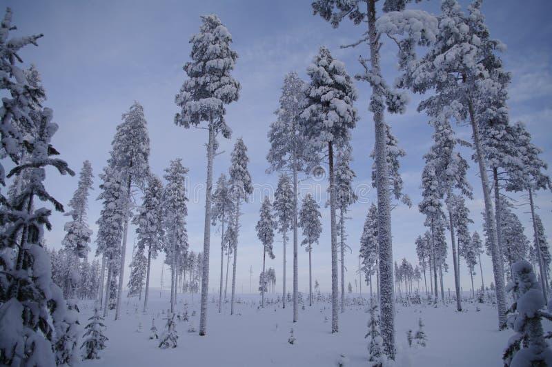 País de las maravillas sueco del invierno imágenes de archivo libres de regalías