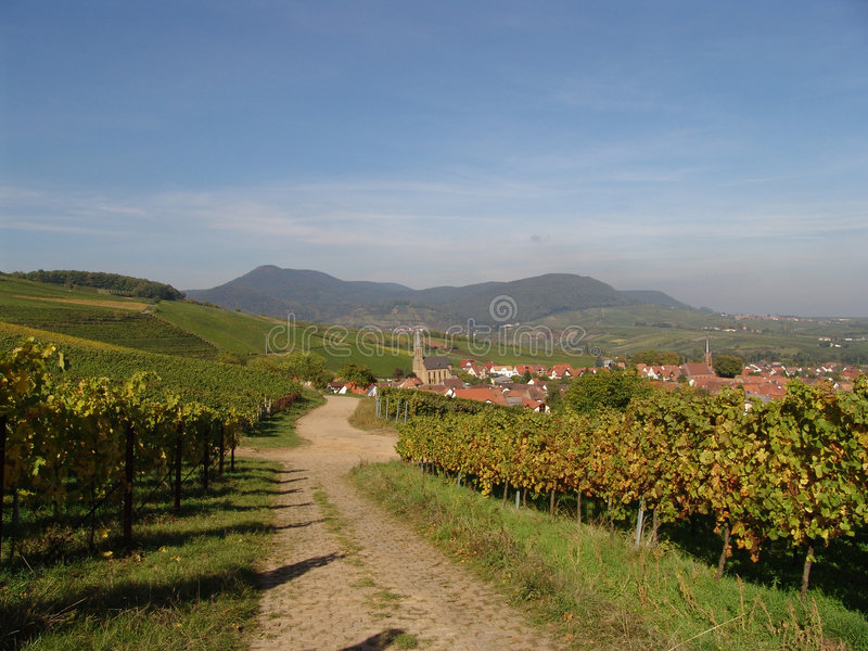 País de vinho imagem de stock
