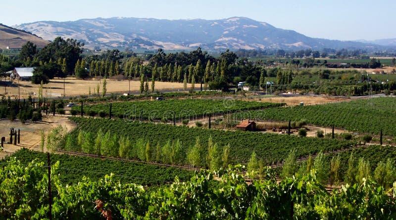 País de vino de California fotografía de archivo