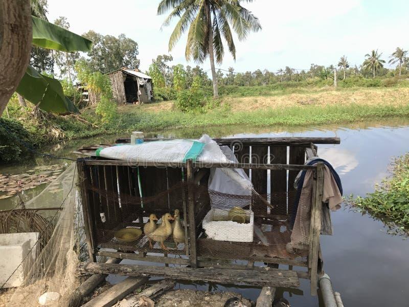País del pato fotos de archivo libres de regalías