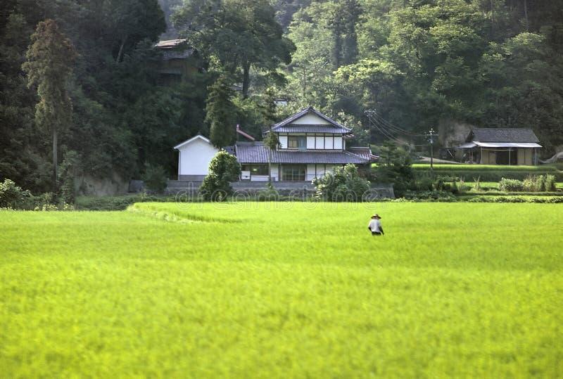País japonês fotos de stock