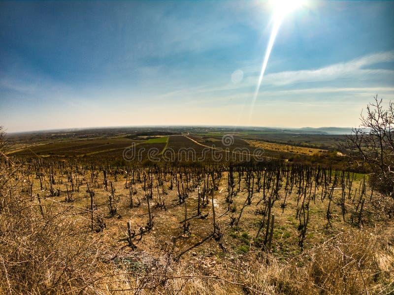 País vinícola húngaro fotografía de archivo