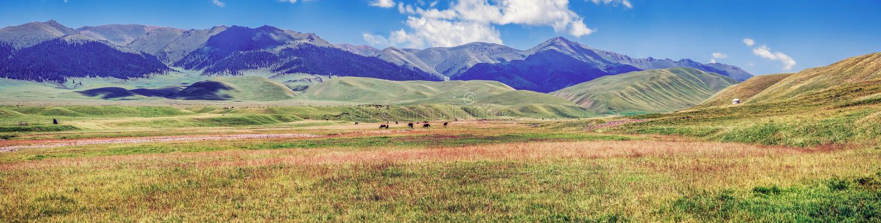 Paśnik na Assy góry plateau Kazachstan, Almaty region obraz stock