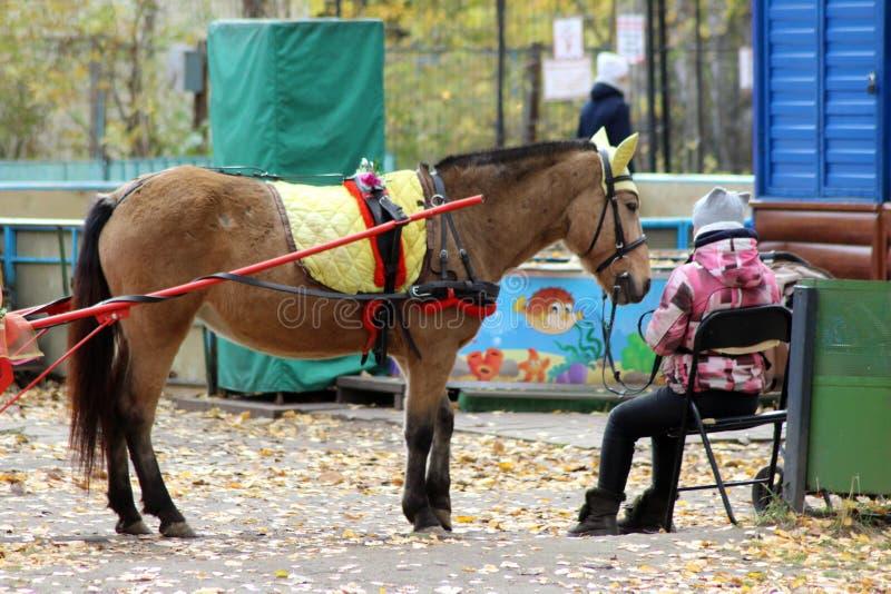 13 2018 Październik Rosja, Izhevsk Koń jechać dziećmi w parku fotografia stock