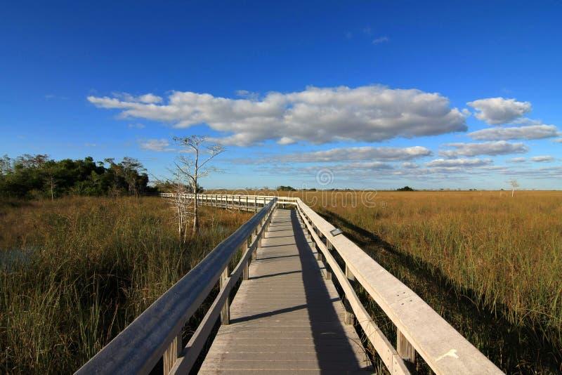 PA-σανός-Okee θαλάσσιος περίπατος, εθνικό πάρκο Everglades, Φλώριδα στοκ εικόνα με δικαίωμα ελεύθερης χρήσης