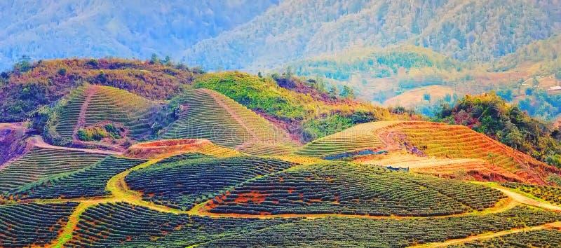 PA холм Sa Lao Cai Вьетнам стоковое изображение