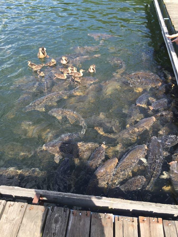 PA del lago Raystown immagine stock libera da diritti