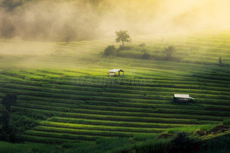 Pa Pong Piang da proibição, os terraços os mais bonitos do arroz foto de stock