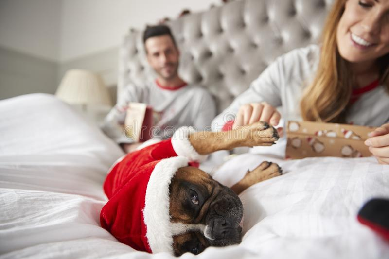 Paar in Bed thuis met Hond Gekleed in Santa Costume Opening Gifts On-Kerstmisdag stock foto