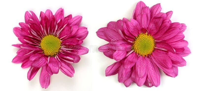 Paar bloemen royalty-vrije stock afbeelding