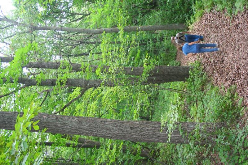 Paar dat in bos wandelt stock foto's