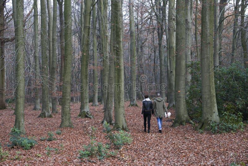 Paar die in een bos lopen stock afbeeldingen