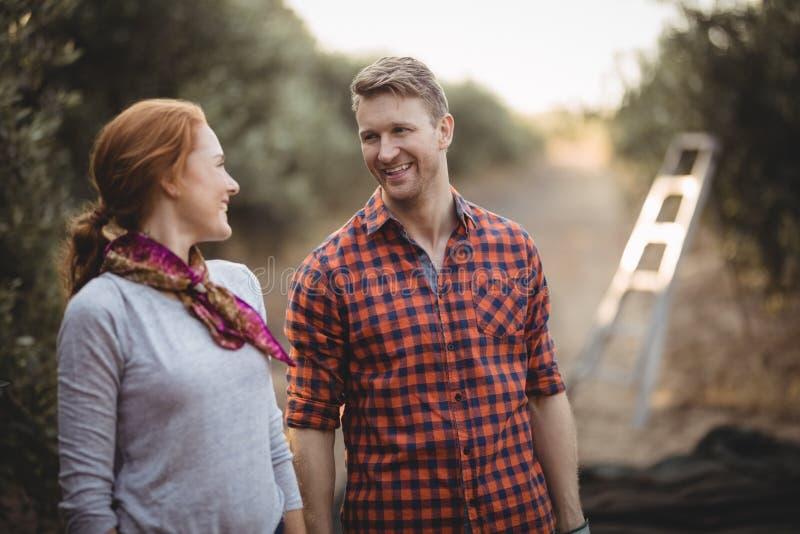 Paar die elkaar bekijken terwijl status bij olijflandbouwbedrijf stock afbeeldingen