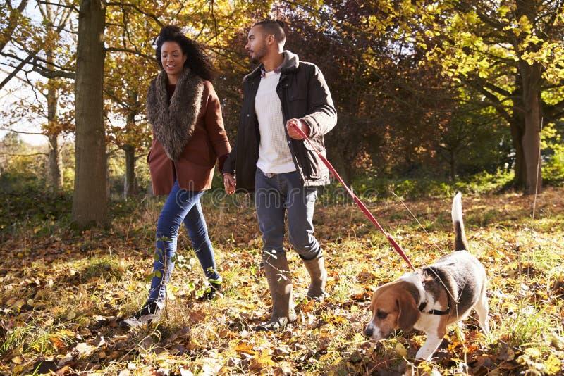 Paar die Hond in Autumn Woodland uitoefenen royalty-vrije stock foto's