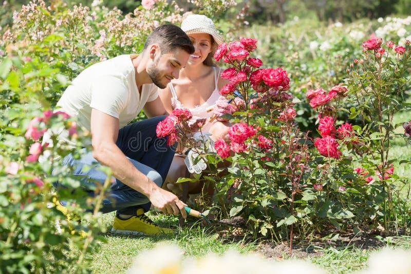 Paar die hun tuin geven stock fotografie