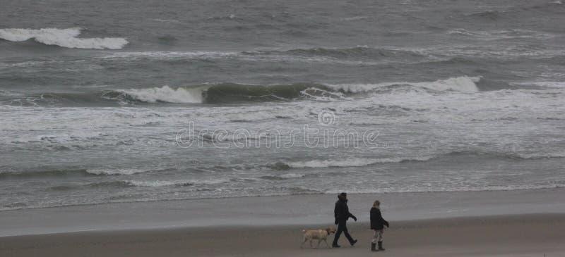 Paar die met de hond lopen royalty-vrije stock afbeeldingen