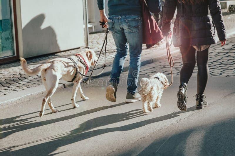 Paar die met twee honden op de straat lopen het effect van de zonglans stock afbeeldingen