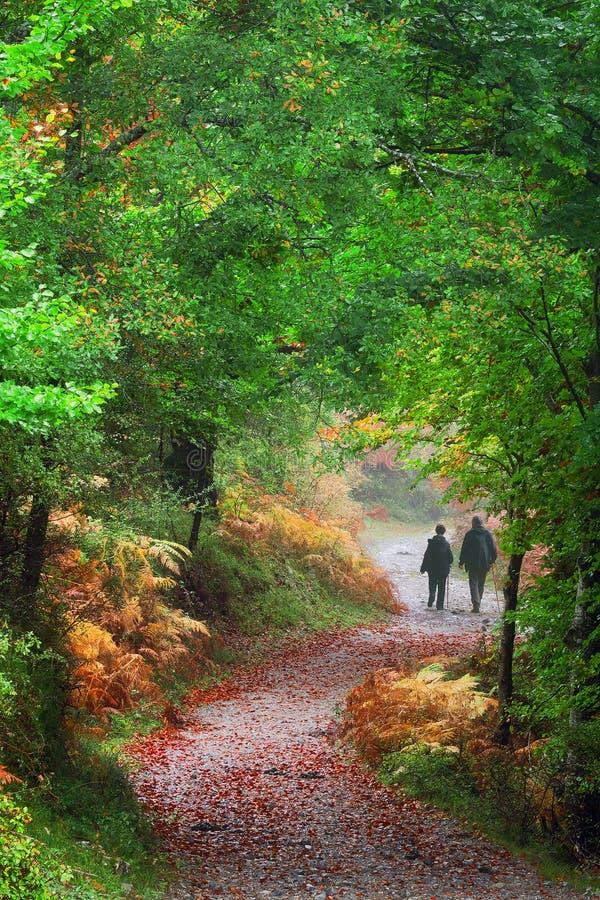 Paar die op weg in bos lopen royalty-vrije stock foto's