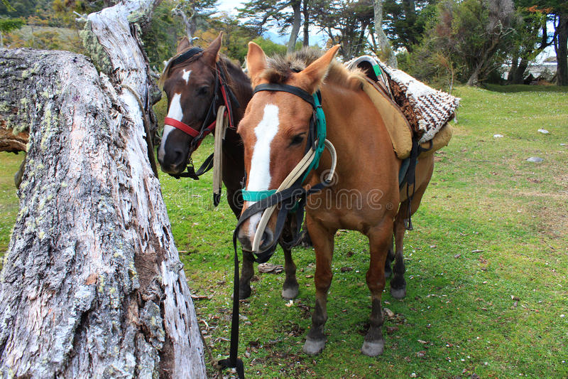 Paar die van paarden op het berijden wachten stock afbeeldingen