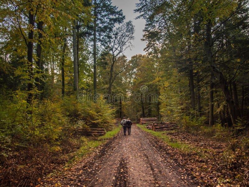 Paar-gehender deutscher Wald im Herbst stockbilder