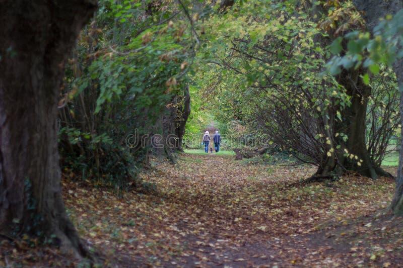 Paar het lopen hond op boom gevoerde weg royalty-vrije stock afbeeldingen