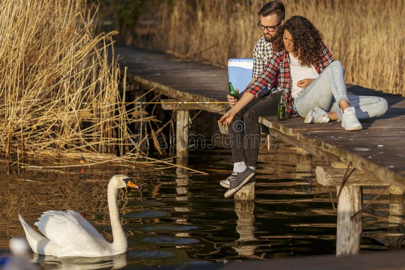 Paar het voeden zwanen bij het meer stock afbeeldingen