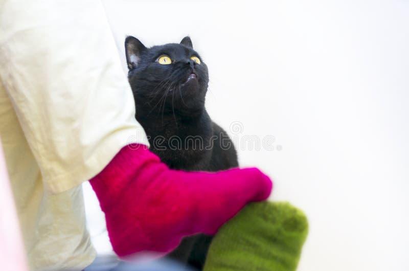 Paar in Kleurrijke Wollen Gebreide Sokken wat betreft elkaar Voeten Het zwarte kat letten op Mensen die thuis in Koud Seizoen ont stock foto